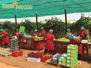 Business   Agriculture   Berekisanang
