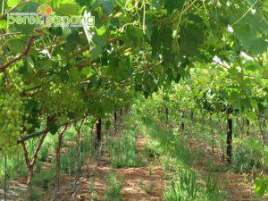 Business | Agriculture | Berekisanang