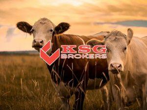 Insurance Brokers in Upington | KSG Brokers